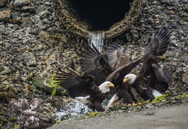 Eagles-3867