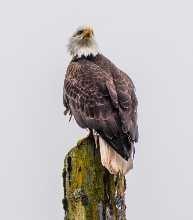 Eagles-3889