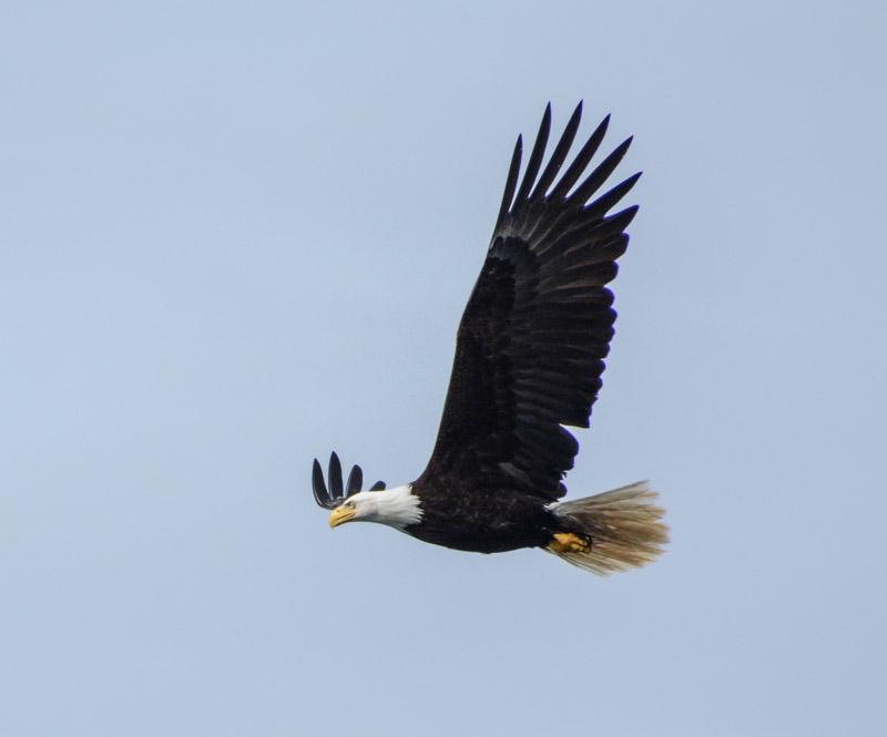 Eagles-6368