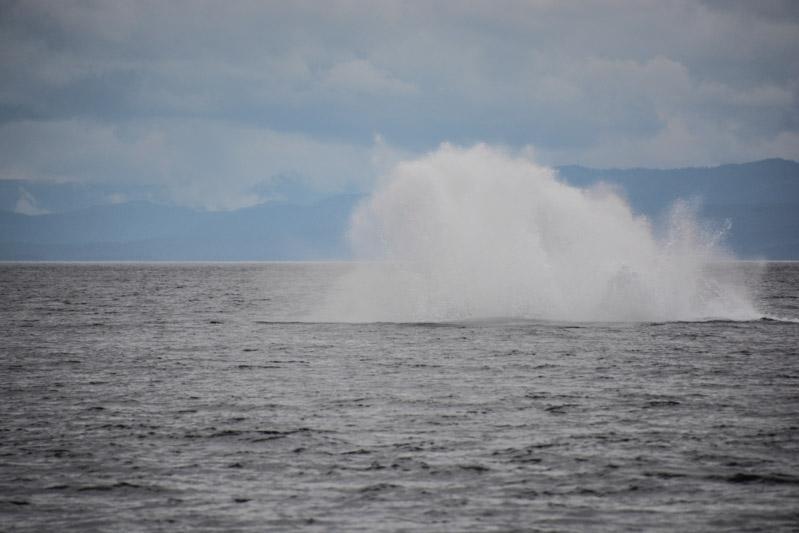 Humpbacks-6977