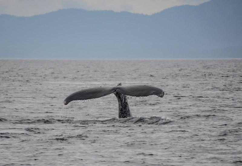 Humpbacks-6959