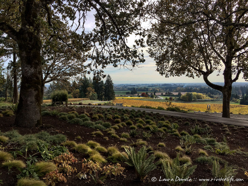 Willamettevalley-9845