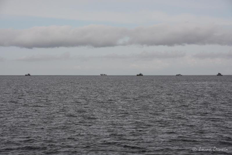 Whalewatching-0389