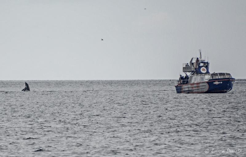 Orcas-0402