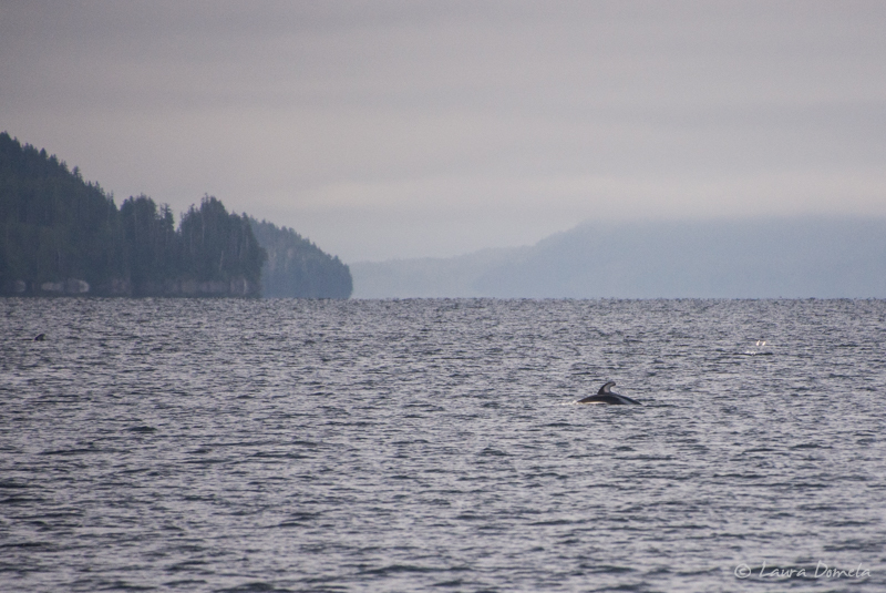 Dolphins-0928