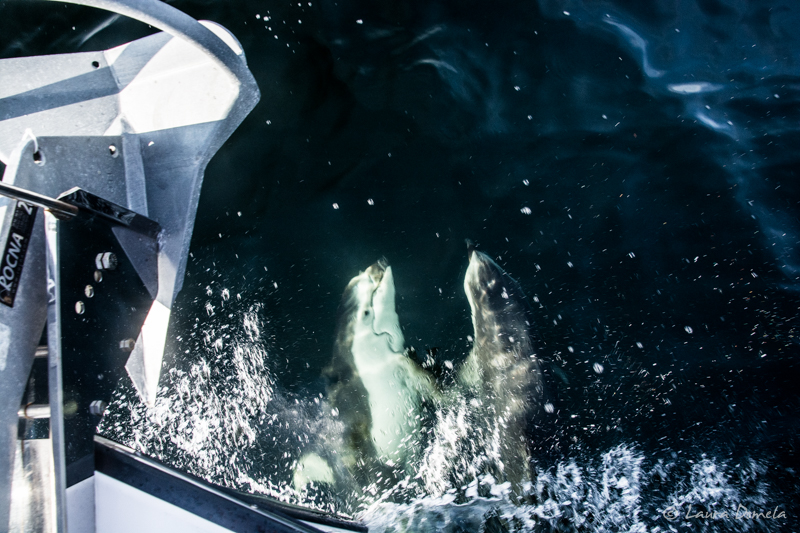 Dolphins-0972
