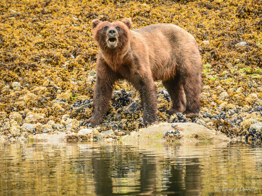 ford_grizzly-2557