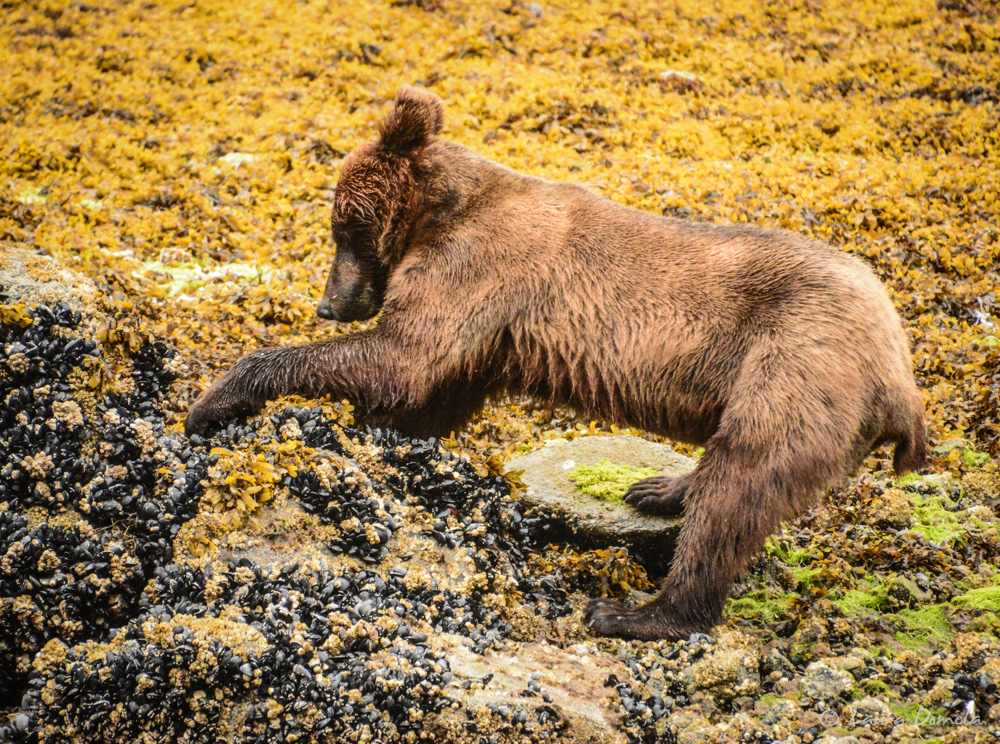 ford_grizzly-2565