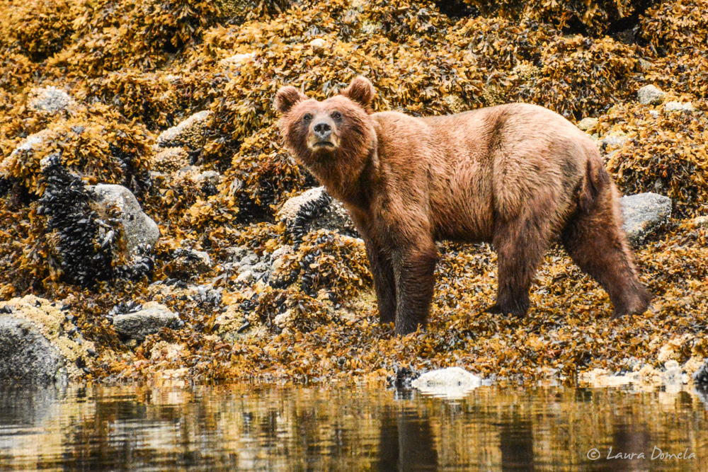 ford_grizzly-2594