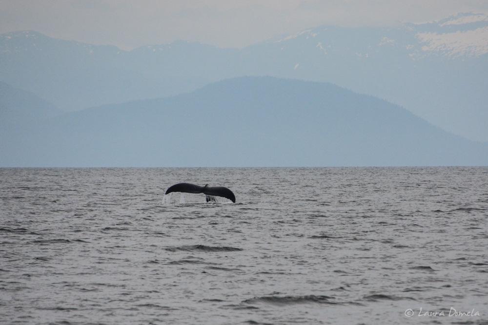 humpbacks-2144