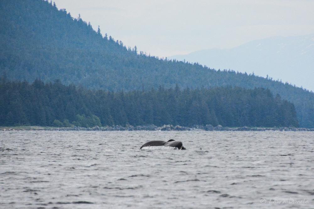 humpbacks-2158