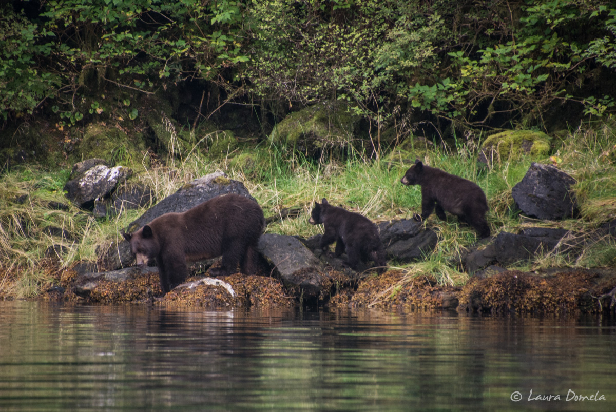 walkercove_bears-5951