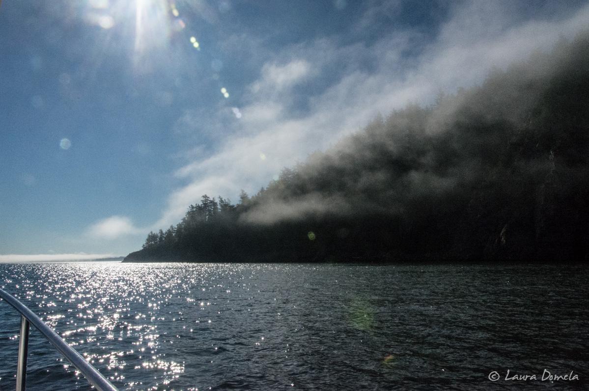 orcasislandfog-8160