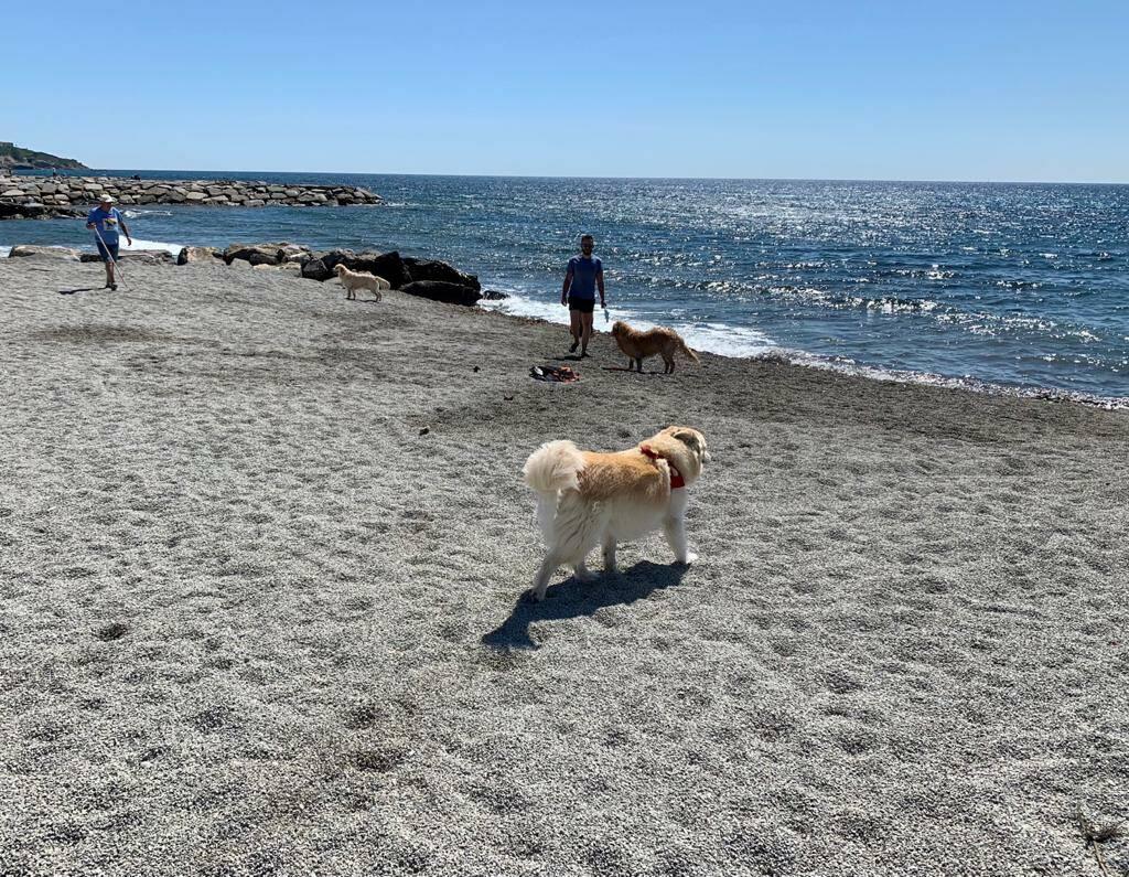Riaperta la spiaggia per cani a San Bartolomeo al Mare - Riviera24