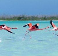 Day trip through Rio Lagartos and San Felipe, Yucatan