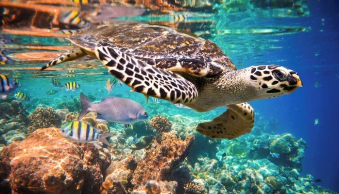 Akumal Snorkeling Riviera Maya