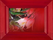 Chiara Denys, Poisoned Flowers - plexiglass cast and lenticular printing 3d