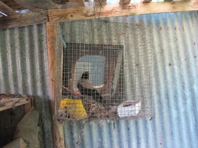 Hen House, veduta dell'installazione presso il pollaio di Casa Sponge (Irene Fenara, Gedankenexperiment, 2016) cortesia dell'artista.