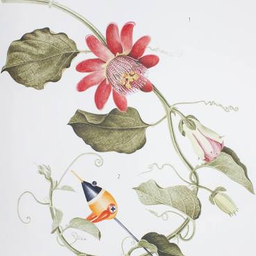 Angelo Maisto, Passiflora mauritiana e subcoccinella Maisti, acquerello su carta, particolare