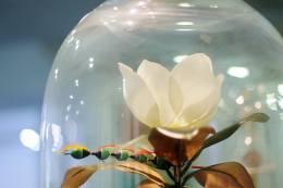 Angelo Maisto, Magnolia Yulan, Lepidoptera Maisti et Eruca Maisti et Coleoptera Maisti- installazione cm 35 ( diametro ) altezza 50 cm, 2015