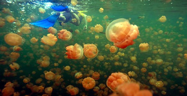 India's Jellyfish Lake