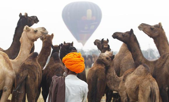 A hot air balloon rises in the background as a herder arrives with his camels at the Pushkar Fair in the desert Indian state of Rajasthan on Nov. 1, 2014.
