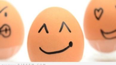Photo of دراسة عن البيض
