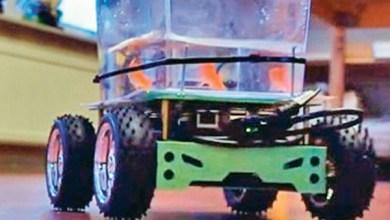 Photo of فيديو: سمكة حقيقية تقود عربة صغيرة