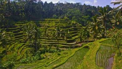 Photo of 10 أشياء غير تقليدية تستطيع فعلها في بالي