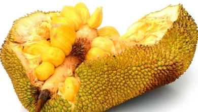 """Photo of القاتل القوي للسرطان ! فاكهة الكاكايا """"جاك فروت"""""""