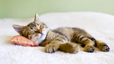 Photo of علاج بحة الصوت عند القطط والكناري