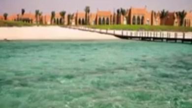 Photo of فيديو: إنقاذ 10 دلافين احتُجزت في مياه ضحلة بمدينة الملك عبدالله الاقتصادية