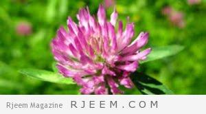 Photo of علاج سرطان الثدي بالأعشاب الطبيعية مجرب