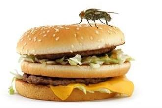 Photo of هذا ما يحدث عندما يحط الذباب على طعامك