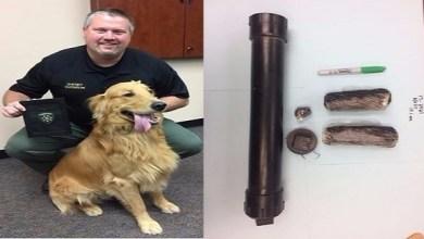 Photo of بالفيديو: كلب يعثر على مخدرات بمنزل صاحبه.. والشرطة تكرمه