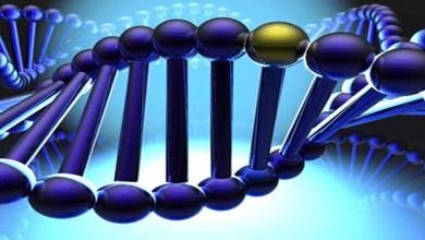 Photo of ماذا تعرف عن الجينات الوراثية