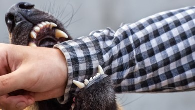 Photo of نصائح صحية لتجنب عضات الحيوانات الأليفة أو الشرسة