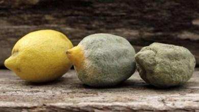 Photo of 6 وسائل لتمييز الأطعمة الفاسدة في المطبخ