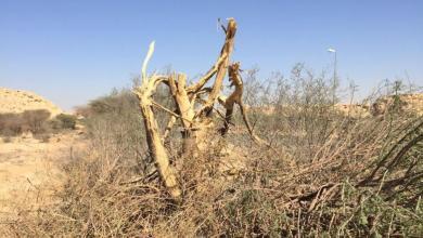 Photo of البيئة توقف مقاولا قطع أشجار حوطة بني تميم.. وتتعهد بزراعتها من جديد