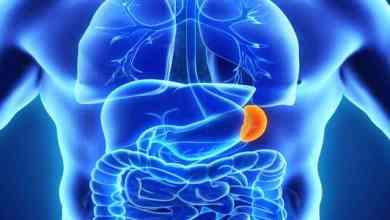 Photo of أهمية الطحال في جسم الإنسان