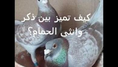 Photo of كيف تميز الذكر من الانثى في الحمام