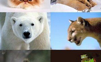 Photo of تفسير ظهور الحيوانات في الحلم