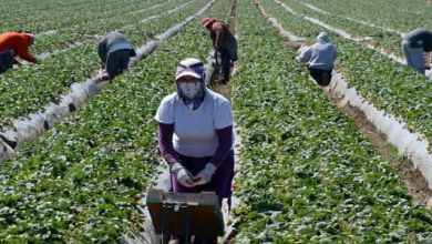 Photo of أسباب ازدياد العمالة الوافدة