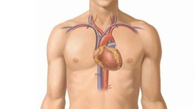 Photo of ما هو القلب ومكان القلب فى جسم الانسان وكيف يعمل القلب ووظيفة القلب