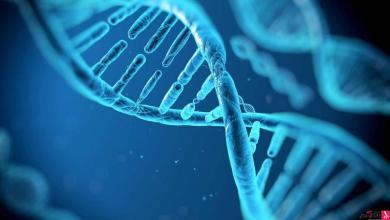 Photo of فحص (DNA) شرط استخراج الهوية الوطنية لمتجاوزي الـ20 عاما