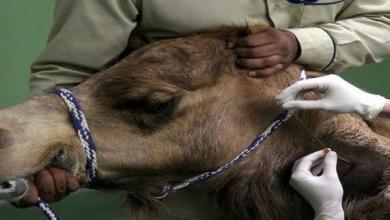 Photo of 400 ألف ريال غرامة تجميل الحيوانات