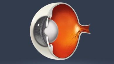 Photo of تقنية حديثة تعتمد على الخلايا الجذعية لعلاج التنكس البقعي في العين