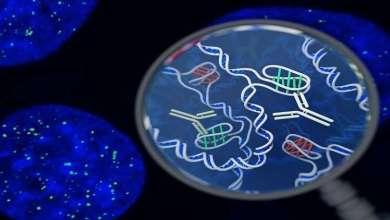 Photo of لأول مرة.. رصد شكل جديد غامض من الحمض النووي داخل خلايا بشرية
