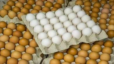 Photo of ما الفرق بين البيض البني والأبيض؟