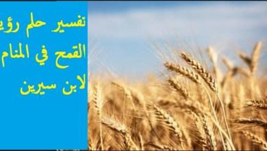 Photo of تفسير حلم رؤية القمح فى المنام لابن سيرين